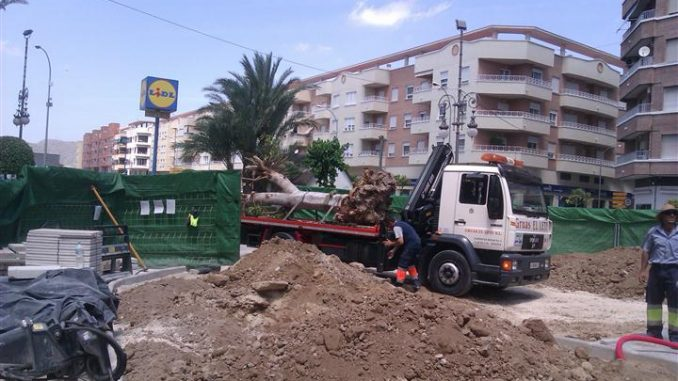 Ficus 1
