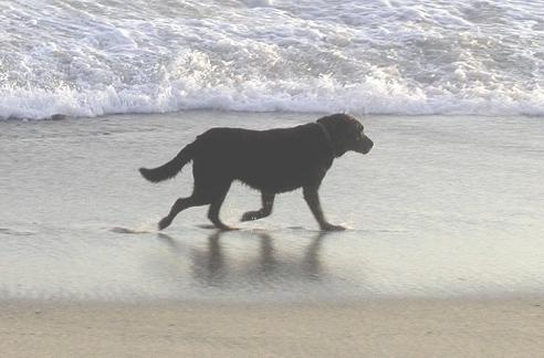 Perruno en la playa de Almeria