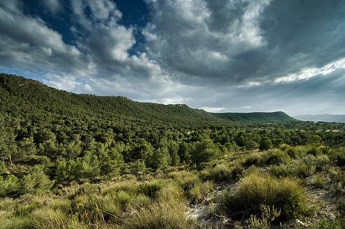 Sierra escaloma