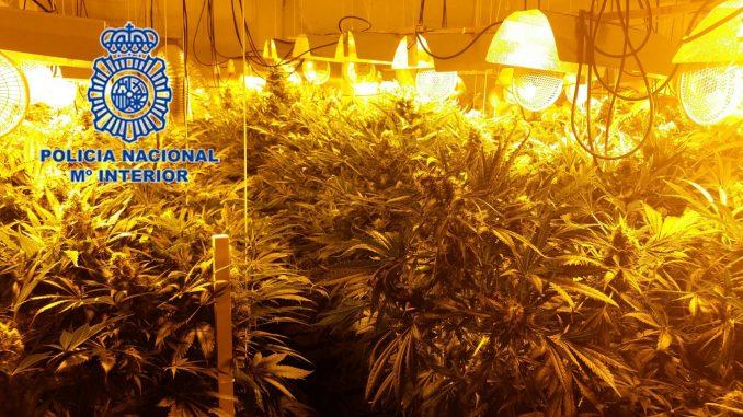 Marihuana Rojales