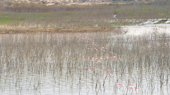 pantano sequía