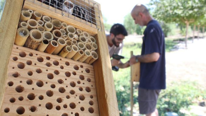 nesting boxes rojales