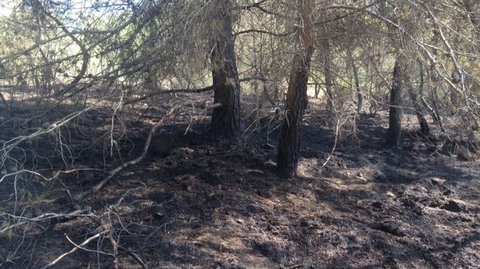 burned trees san miguel