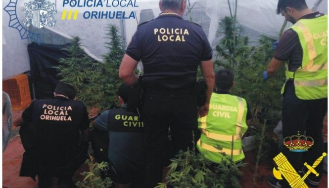 marijuana orihuela