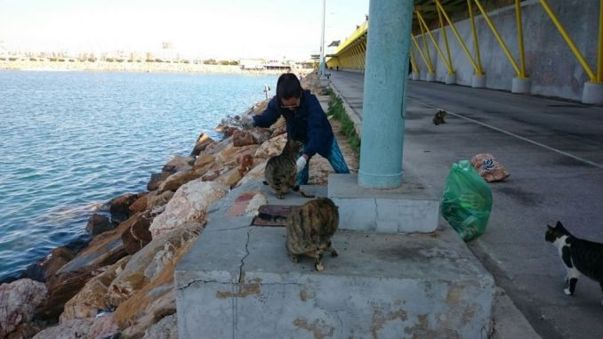 feeding cats torrevieja