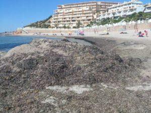 Agricultura retira 3.000 kilos de residuos flotantes del litoral