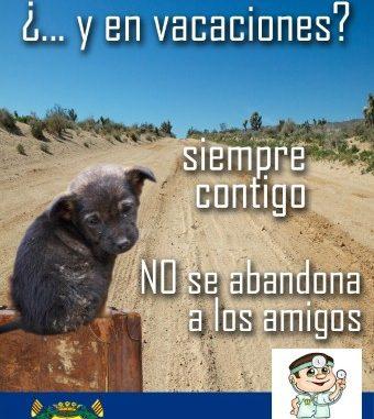 No abandone a su cachorro