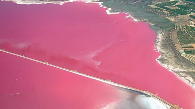Laguna rosa de Torrevieja