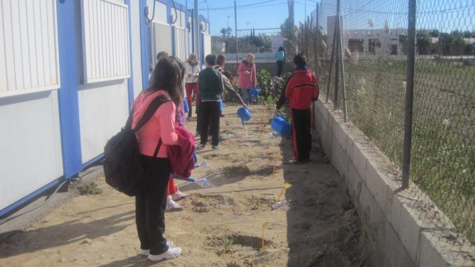Huerto escolar San Fulgencio 1 21nov2013