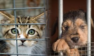 'Adopta un amigo'  en Torrevieja