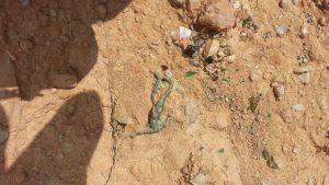 El juzgado acepta investigar nuevas parcelas  con posibles enterramientos de basura en La Murada