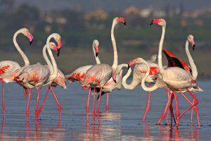 La Laguna de la Mata recupera su ecosistema