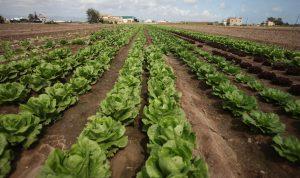 Agricultura anticipa 48,6 millones de euros del pago único