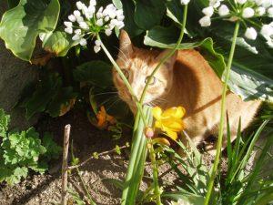 Torrevieja sacrificó en 2013 más de doscientos gatos
