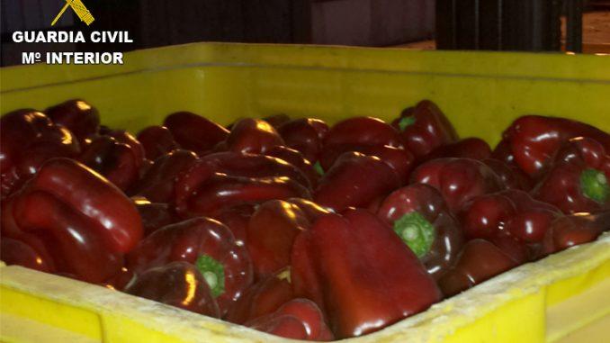Pimientos rojos 29jun15