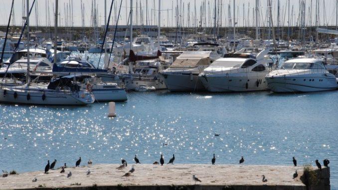 puerto torrevieja