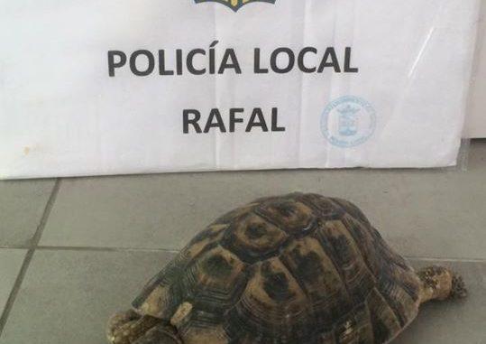 tortuga mora ejemplar Rafal