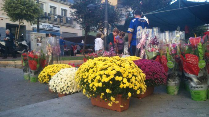 Flores Todos Santos