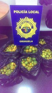 La Policía Local recupera en Orihuela 100 kilos de mandarinas robadas