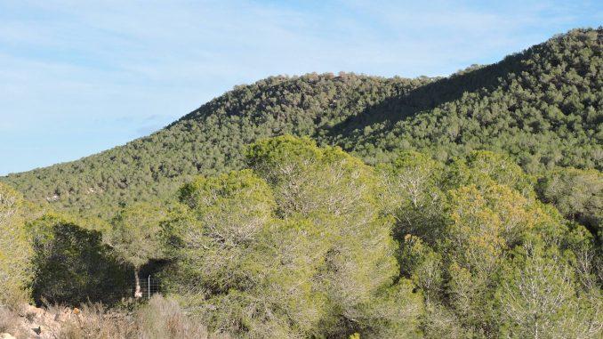 Sierra Escalona 2