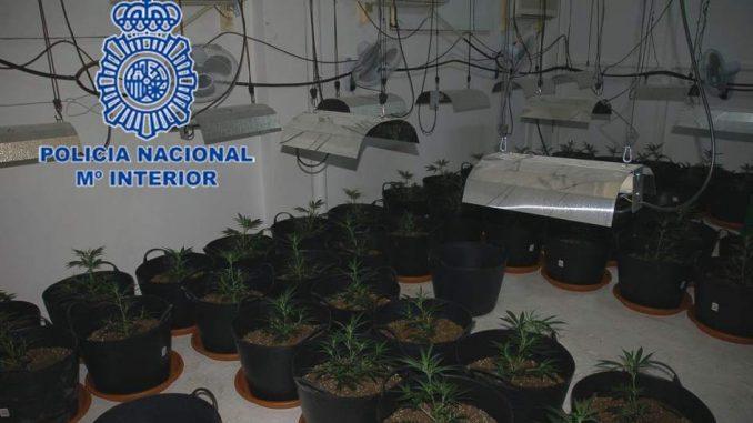 plantacion marihuana benferri