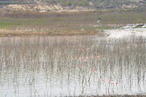 La sequía destruye 1.000 hectáreas de hortalizas en la Vega Baja