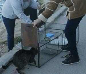 Torrevieja comienza con su campaña para castrar a 200 gatos callejeros