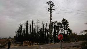 Un incendio calcina decenas de palmeras en un bancal de Jacarilla