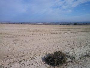 Denuncian nuevas roturaciones en la zona ZEPA de Sierra Escalona y Dehesa de Campoamor