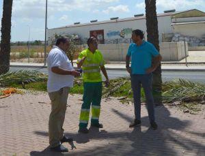 Orihuela realiza labores de mantenimiento en las palmeras de Marqués de Molins