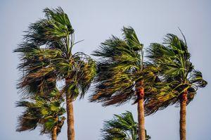 Abril seco y ventoso en la Vega Baja