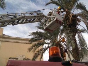 Talan una palmera en la avenida Calvo Sotelo por riesgo de caída