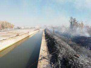 Un incendio calcina de 5.000 m2 de matorrales y cañar en un huerto de San Fulgencio