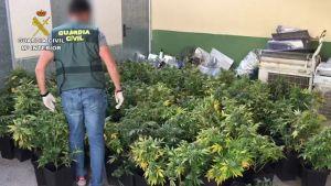 Detenidas 14 personas de una misma familia por cultivar y vender drogas en la Vega Baja