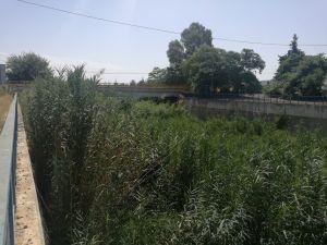 El PP de Benejúzar requiere de manera urgente a la CHS el desbroce del cauce del río y ramblas