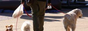 Rafal aprueba la ordenanza que regulariza la tenencia de animales para garantizar la seguridad e higiene públicas