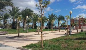 La Diputación de Alicante invierte 45.500 euros en las obras de mejora del arbolado de Cox