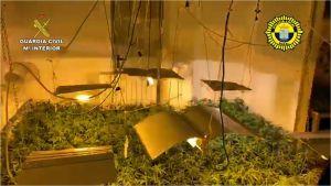 La Guardia Civil desmantela un cultivo de marihuana dentro del casco urbano de Rafal