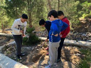Los escolares de Callosa reforestan La Pilarica con motivo del día del Árbol