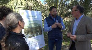 Orihuela anuncia que invertirá 1,5 millones de euros en dos años para revitalizar su histórico Palmeral