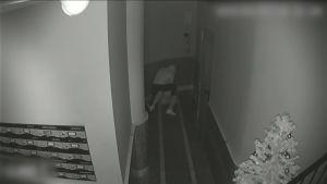 Detenido en Torrevieja el hombre que asaltó en un portal a una mujer para robarle el bolso